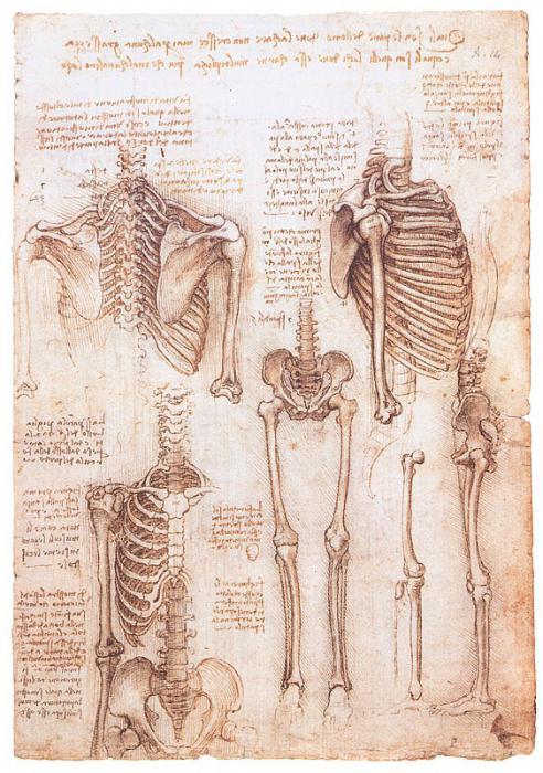Анатомия человека 1