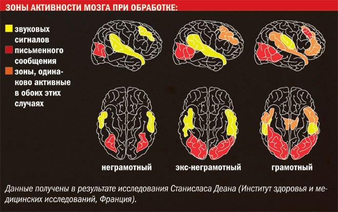 Зоны активности мозга при обработке